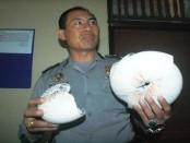 Polsek KP3 Benoa mengamankan ribuan cangkang kerang langka jenis nautilus pompilius yang akan dijual sebagai cenderamata di Bali