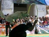 Kontes anjing Kintamani - foto: Koranjuri.com
