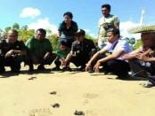Warga Dusun Kola, Desa Ngodimeda Kecamatan Rote Tengah, melepaskan tukik-tukik yang sebelumnya ditangkar untuk kepentingan konservasi lingkungan - foto: Isak Doris Faot/Koranjuri.com