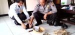 Satu Tas Berisi Ratusan Peluru Aktif Ditemukan Warga Purworejo