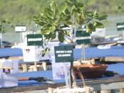 Ilustrasi mangrove/koranjuri.com