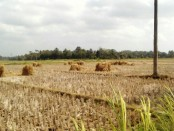 """Sedikitnya, terdapat 50 desa dari 10 kecamatan sudah mengalami kekeringan dan krisis air bersih,"" jelas Sigit - foto: Sujono/Koranjuri.com"