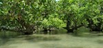 Menjelajah Mangrove Ndii Lifu yang Usianya Mencapai 1.000 Tahun