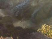 Kondisi kawah Gunung Agung - foto: Istimewa