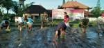Tingkatkan Produktivitas Panen, PPL TNI Terapkan Pola Tanam Jajar Legowo