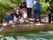 Bupati Purworejo Agus Bastian, saat menebar ribuan benih ikan, dalam kegiatan Bupati Saba Desa, Kamis (15/3), di Desa Sedayu, Loano - foto: Sujono/Koranjuri.com