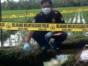 Tim Identifikasi dan Polsek Mengwi, Polres Badung, melakukan Olah TKP di lokasi penemuan orok - foto: Istimewa