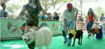 Anjing-anjing Cantik Diatas 'Red Carpet' dalam Sosialisasi Rabies