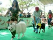 Pecinta anjing di Denpasar mengikuti kontes anjing sehat dalam mensosialisasikan rabies di kalangan penghobinya - foto: Istimewa