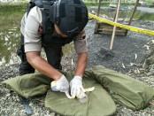 Ranjau darat aktif sisa peninggalan perang dunia kedua, yang ditemukan Fandi Ahmad (34), warga Desa Kelopogodo,Kecamatan Gombong, Kebumen, bersama seorang temannya, saat menambang pasir - foto: Sujono/Koranjuri.com