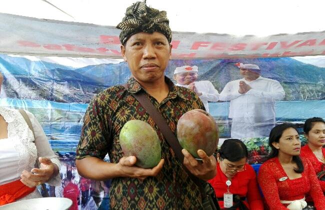 I Wayan Badan, salah satu pelopor pertanian organik di Bali - foto: Koranjuri.com