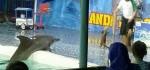 Pertunjukan Lumba-lumba Diprotes Aktivis Satwa, Ini Jawaban Pihak EO