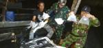 Penyelundupan Baby Lobster Senilai Rp 19,5 Miliar Digagalkan di Perairan Jambi