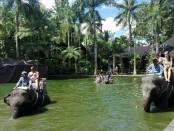 Aktifitas turis bersama gajah-gajah di Taman Safari Gajah di Desa Taro, Tegalalang, Gianyar - foto: Koranjuri.com