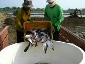 Pembudidaya ikan patin - foto: Istimewa
