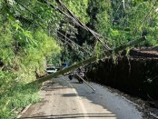 Kondisi jalanan penghubung antara Kecamatan Payangan dengan Kecamatan Tegallalang, Selasa (14/4/2020) yang terputus akibat pohon tumbang yang menimpa tiga buah tiang listrik milik PLN - foto: Catur/Koranjuri.com