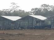 Lokasi tempat pembangunan Tirtanindo Education Farm di Desa Gebang, Kecamatan Gebang, Purworejo - foto: Sujono/Koranjuri.com