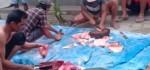 Daging Babi Anjlok, Peternak Banting Harga Rp 12 ribu/kg agar bisa Beli Pakan