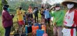 Ratusan Hektar Sawah di Purworejo Terserang Wereng, Dispertan Lakukan ini