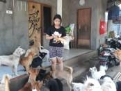 Anak Agung Dewi Liana Pertiwi (16) saat memberikan makanan terhadap anjing-anjing peliharaannya, Jumat (8/5/2020) - foto: Catur/Koranjuri.com