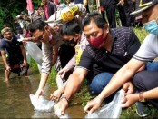 Aktivitas penebaran benih ikan nila di Subak Uma Kawan, Desa Adat Bukian, Kecamatan Payangan, Gianyar, Sabtu (8/8/2020) kemarin - foto: Catur/Koranjuri.com