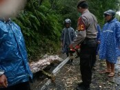 Petugas kepolisian dibantu dengan warga saat melakukan pembersihan material pohon waru yang tumbang di Jalan Raya Banjar Kerta Payangan Gianyar, Minggu (22/11) sore kemarin - foto: Catur/Koranjuri.com