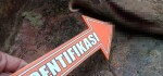 2 Ekor Babi Mati Disabit Orang Tak Dikenal, Polisi Lakukan Penyelidikan