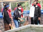 Ketua TP PKK dan Dekranasda Provinsi Bali Putri Suastini Koster mengunjungi budidaya ikan air tawar dengan sistem bioflok di Desa Toya Bungkah, Kintamani - foto: Istimewa