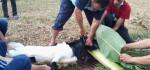Idul Adha, SMKN 8 Purworejo Bagikan Ratusan Bungkus Daging Kurban