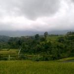 Desa Wisata Jatiluwih di Desa Penebel Kabupaten Tabanan, sebagai desa wisata dengan panorama sawah berundak - foto: Koranjuri.com