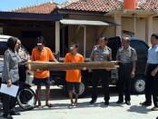 Kedua pelaku pencurian dengan barang bukti kayu, kini ditahan di Mapolsek Banyuurip - foto: Sujono/Koranjuri.com
