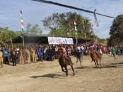 Pacuan kuda tradisional masyarakat Rote Ndao yang kini dihidupka lagi sebagai daya tarik wisatawan - foto: Isak Doris Faot/Koranjuri.com