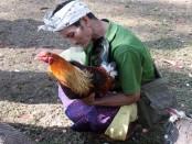 Arena pertandingan berada di areal halaman di Pura Hyang Api di Desa Pakraman Kelusa, Gianyar, Bali. Konon, Warga harus melakoni sabung ayam terkait dengan berkah keselamatan untuk ternak-ternak lain, seperti sapi atau babi yang dipiara oleh warga - foto: Koranjuri.com