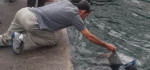 Pria Bercambang Ditemukan Tewas Mengapung di Pelabuhan Benoa