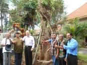 Penanaman pohon Bodhi yang merupakan pohon langka - foto: Lanjar Artama/Koranjuri.com