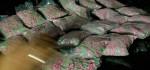 Perempuan Pembawa 5.000 Butir Ekstasi Diamankan di Bandara Ngurah Rai
