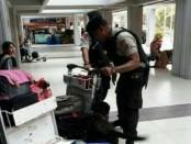 Personel Direktorat Sabhara Polda Bali yang tergabung dalam Ops Cipkon Agung II melakukan pemeriksaan secara manual dengan menurunkan 4 anjing pelacak milik unit K9 Polda Bali - foto: Istimewa