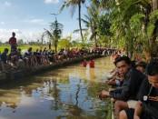 Tak kurang dari 2.000 pemancing ramaikan sosialisasi duet pasangan Koster-Ace di di saluran irigasi Subak Panglan kelurahan Sempidi - foto: Istimewa