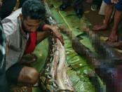Korban ketika dikeluarkan dari perut ular - foto: Istimewa