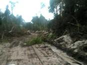Akses jalan yang selama ini dilalui  warga desa Bagan, sebuah desa terisolir di Kecamatan Toba, Kabupaten Sanggau, Provinsi Kalimantan Barat - foto: Istimewa
