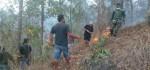 Wilayah Hutan Gunung Batur Terbakar