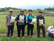 Sebanyak 250 kg bibit gabah jenis Sudikerta 1 dan Sudikerta 2 diserahkan ke petani di Jembrana - foto: Istimewa