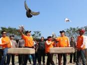 Meriahkan HUT Bhayangkara Ke-73, Polres Kebumen mengadakan lomba Merpati Kolong di Lapak Sidomoro, Kecamatan Buluspesantren - foto: Sujono/Koranjuri.com