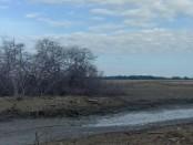 Pohon mangrove yang mengering di areal reklamasi Pelabuhan Benoa - foto: Istimewa