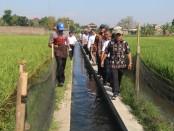 Kementerian Kelautan dan Perikanan (KKP) terus mendorong perluasan kawasan minapadi di berbagai daerah di Indonesia. Adapun Provinsi DIY menjadi salah satu target pengembangan kawasan minapadi tersebut - foto: Istimewa