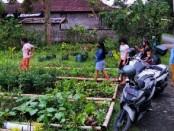 Masyarakat yang datang ke Pekenbibit, Jalan Antugan, Banjar Badung, Desa Malinggih Payangan untuk mendapatkan bibit sayuran gratis - foto: Catur/Koranjuri.com