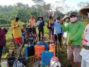Para petani di Desa Rejosari, Grabag, saat mengikuti breefing sebelum melakukan semprot massal dalam penanggulangan hama wereng, Rabu (13/5) - foto: Sujono/Koranjuri.com