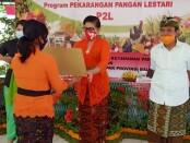 Ketua TP PKK Bali Putri Suastini Koster menghadiri penyerahan bantuan stimulus kepada Kelompok Wanita Tani (KWT) program Pekarangan Pangan Lestari (P2L) se-Bali, di Kantor Dinas Pertanian dan Ketahanan Pangan Provinsi Bali, Kamis (6/8/2020) - foto: Istimewa