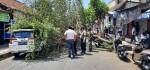 Serempet Pohon Kersen, Polisi Amankan Sopir Truk