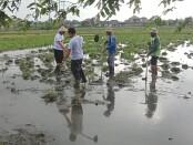 Calon Walikota Denpasar Gede Ngurah Ambara Putra bersama Wakil Walikota Made Bagus Kertha Negara menyapa petani di Subak Muntig, Intaran, Sanur, Jumat (23/10/2020) pagi - foto: Istimewa